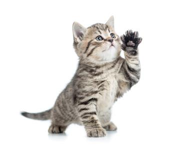 adorable chaton